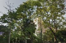 Eletropaulo corta árvores