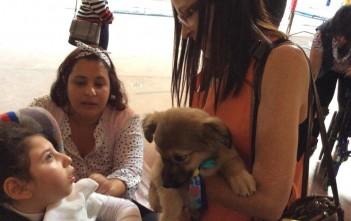 Ação recente desenvolvida na Adefav, com visita de cães aos atendidos. Foto: Adefav